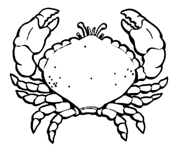 Crab, : Sea Animal Crab Coloring Page