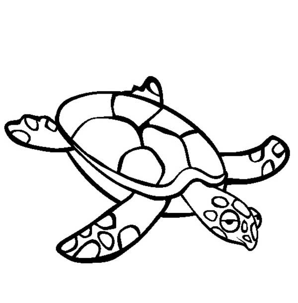 Turtle, : Sea Turtle is Boring Coloring Page