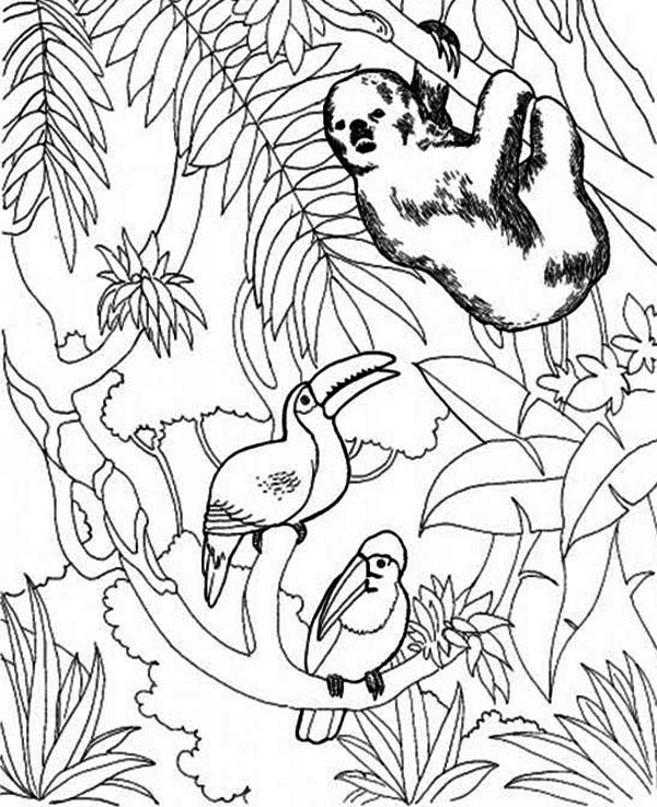 Toucan, : Sloth and Toucan Bird Coloring Page