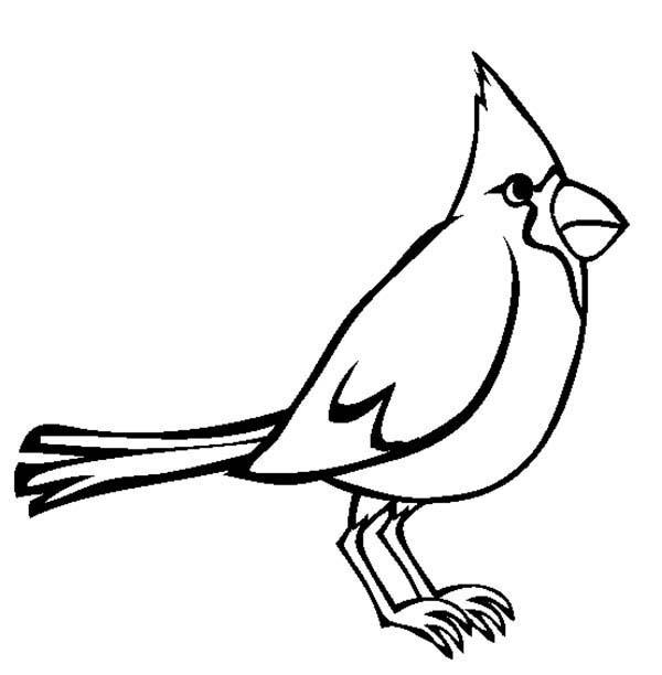 Cardinal Bird, : Sound of Cardinal Bird Coloring Page