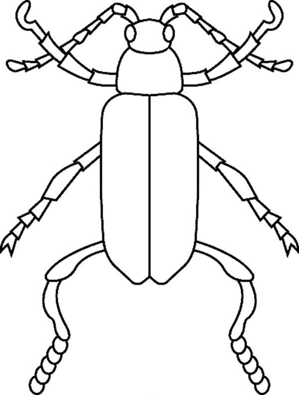 Bugs, : Species of Bugs Coloring Page