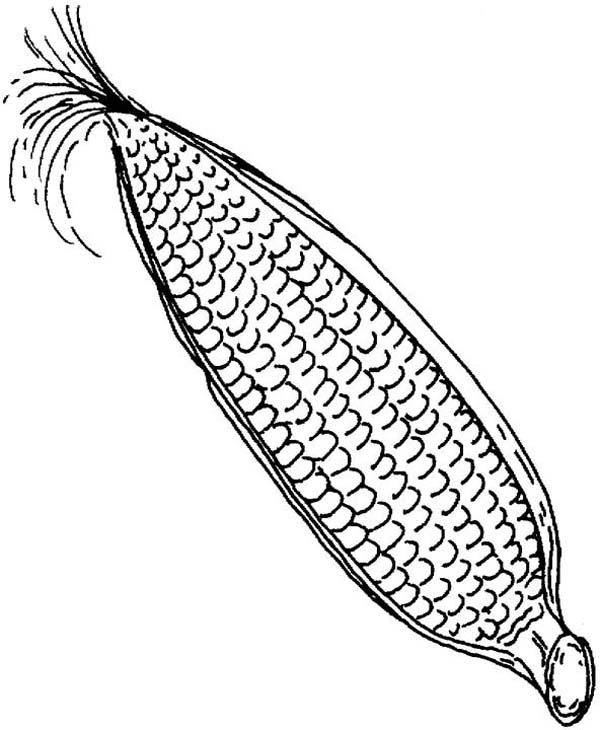 Corn, : Steam Corn Coloring Page