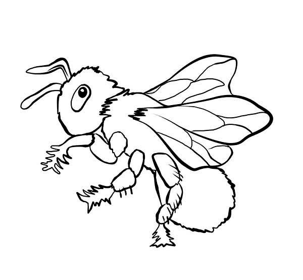 Bugs, : Stinging Bee in Species of Bugs Coloring Page