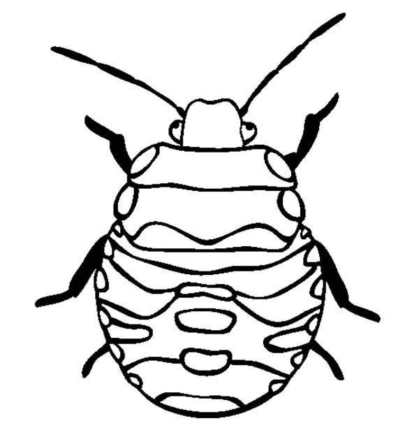 Bugs, : Stink Bugs Coloring Page