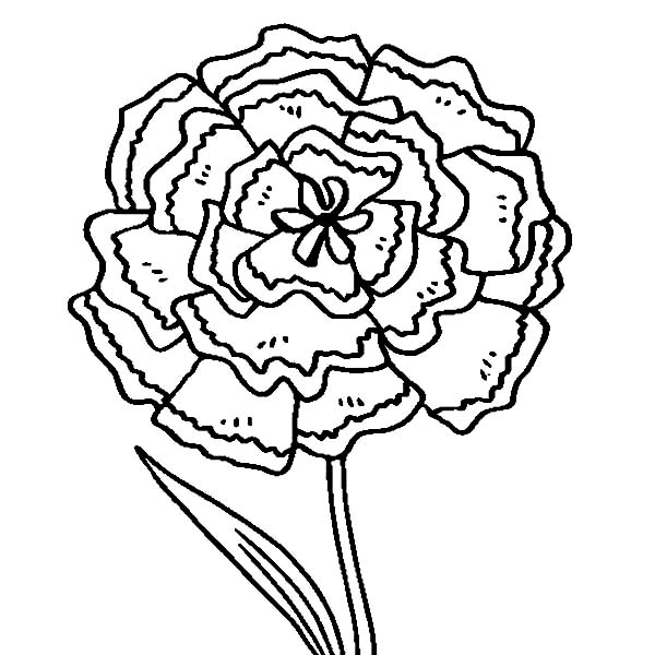 Carnation Flower, : The Green Carnation Coloring Page