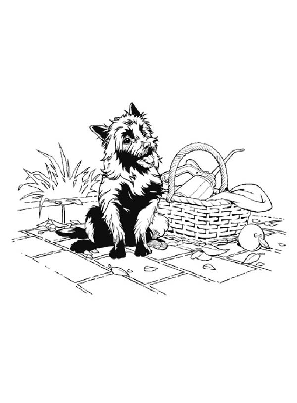 The Wizard of Oz, : Toto from the Wizard of Oz Coloring Page