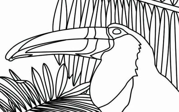Toucan, : Toucan Between Palm Tree Coloring Page