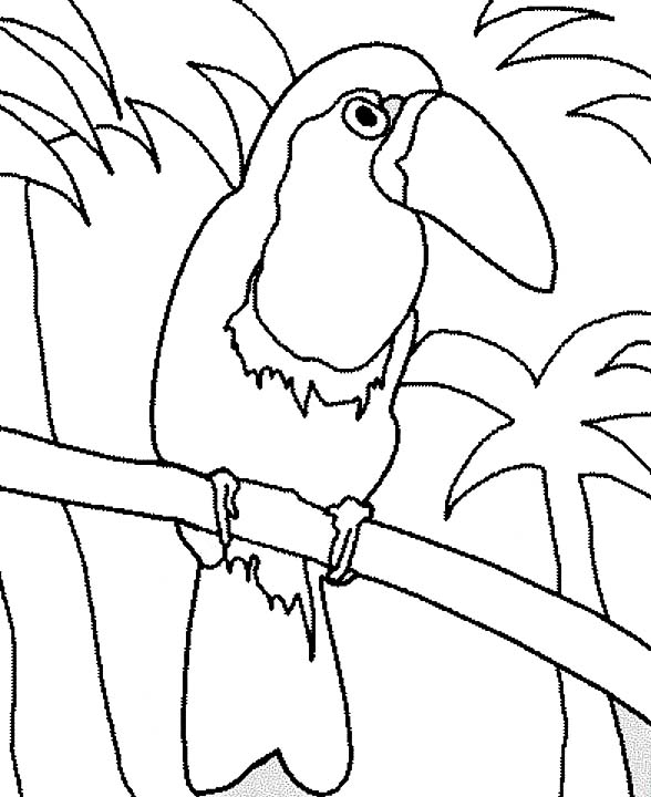 Toucan, : Toucan Coloring Pages
