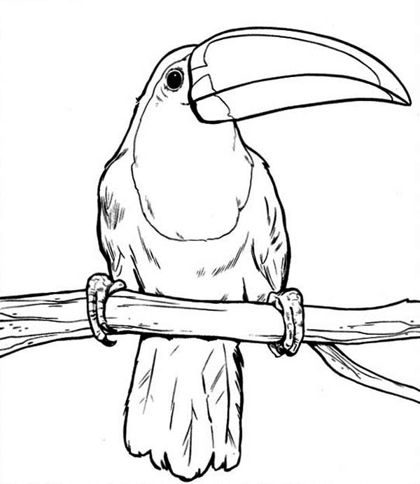 Toucan, : Toucan Rest After Hunting Coloring Page