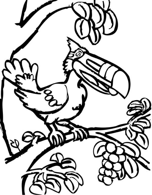 Toucan, : Toucan Wearing Google Coloring Page