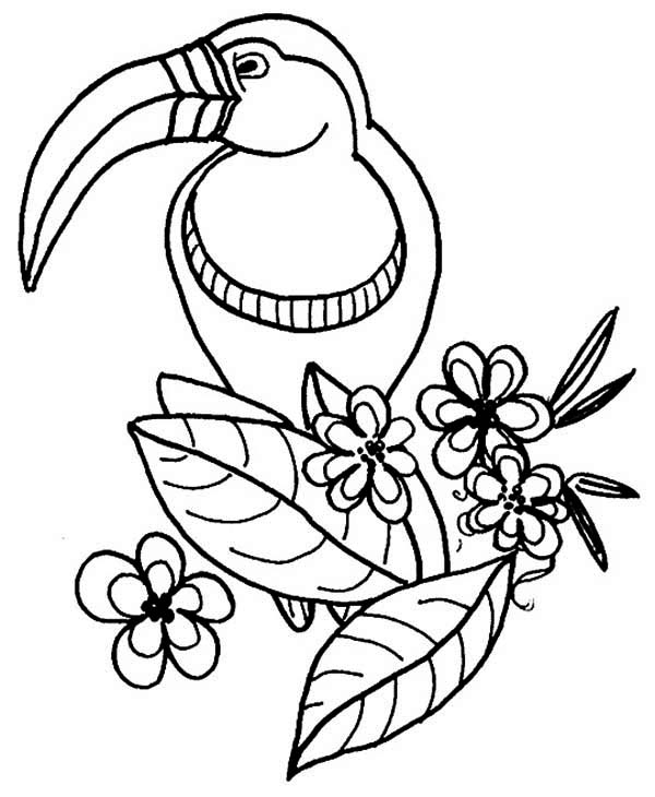 Toucan, : Toucan and Flower Coloring Page