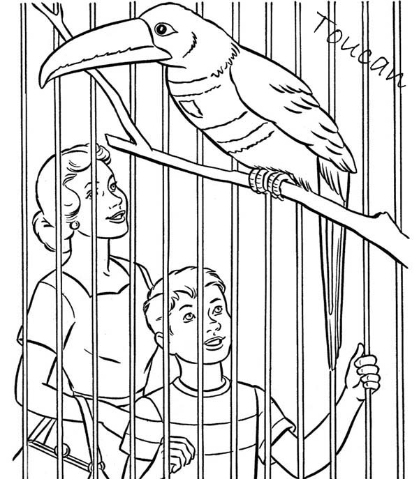 Toucan, : Toucan in a Zoo Coloring Page