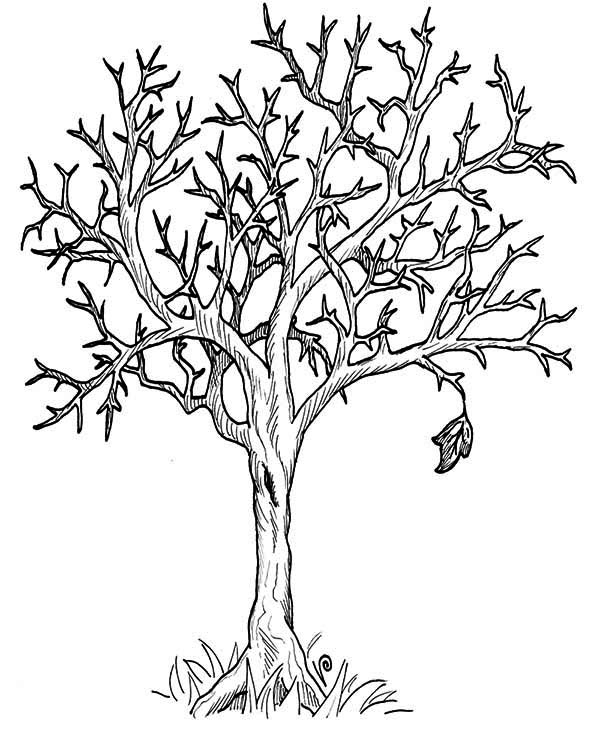 Autumn, : Tree Without Leaves in Autumn Season Coloring Page