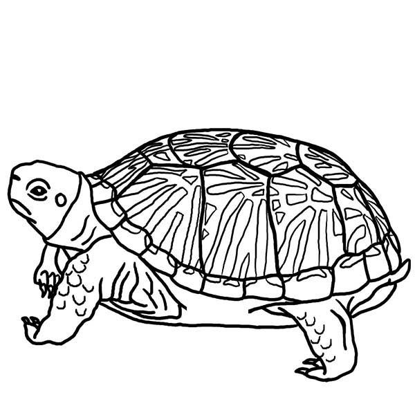 Turtle, : Turtle Hide His Head Coloring Page