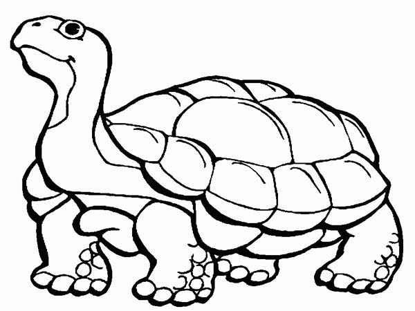 Turtle, : Turtle Slowly Walking Coloring Page