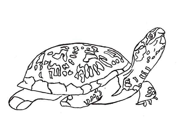 Turtle, : Turtle Want to Find Place to Lay Eggs Coloring Page