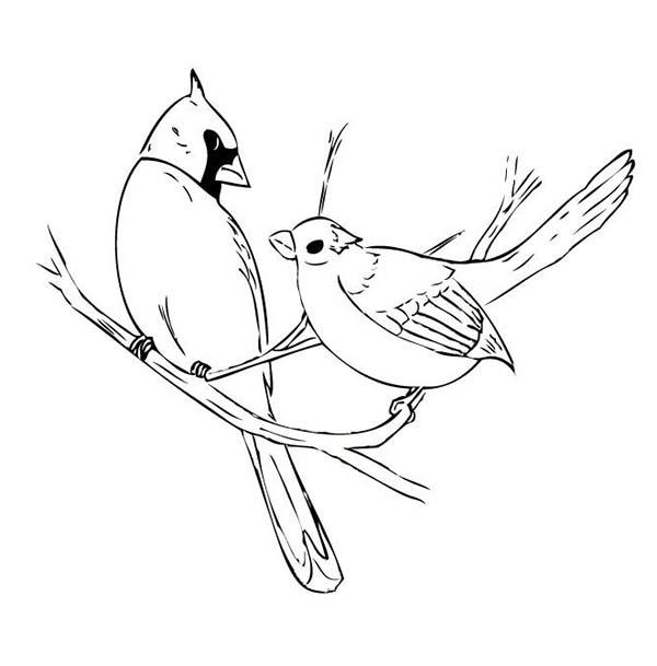 Cardinal Bird, : Two Cardinal Bird Mating Coloring Page