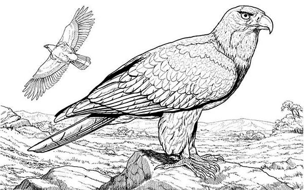 Eagle, : Two Eagle Mating Coloring Page