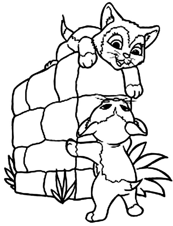 Cat, : Two Lovely Little Cat Coloring Page