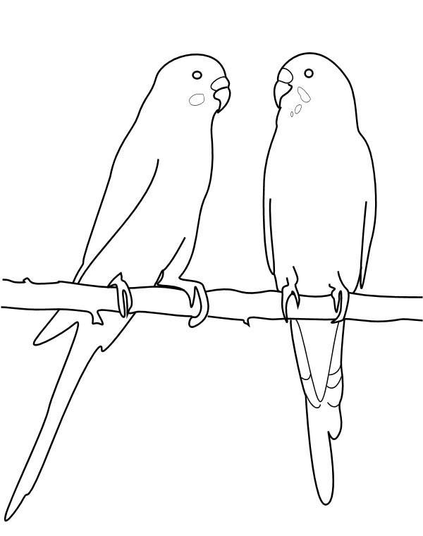 Parakeet, : Two Parakeet Mating Coloring Page