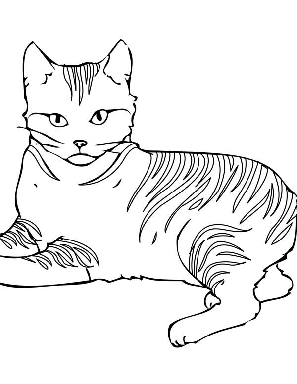Cat, : An Alarmed Cat on Guard Coloring Page