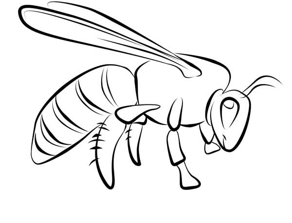 Bugs, : Wasp Species of Bugs Coloring Page