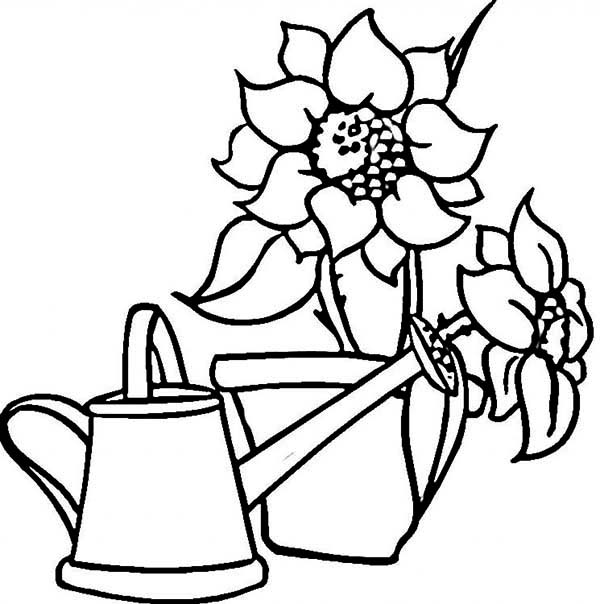 Watering Can, : Watering Can and Beautiful Sunflowers Coloring Page
