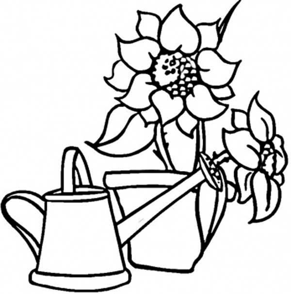 Watering Can, : Watering Can and Sunflowers Coloring Page