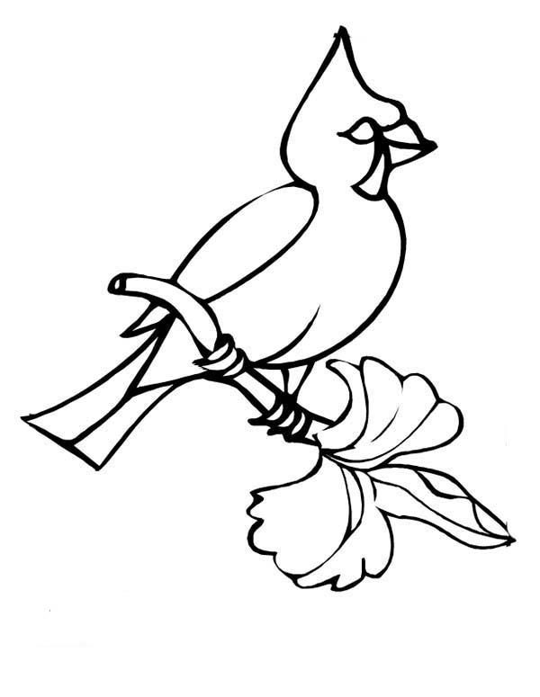 Cardinal Bird, : Winter Bird Cardinal Coloring Page