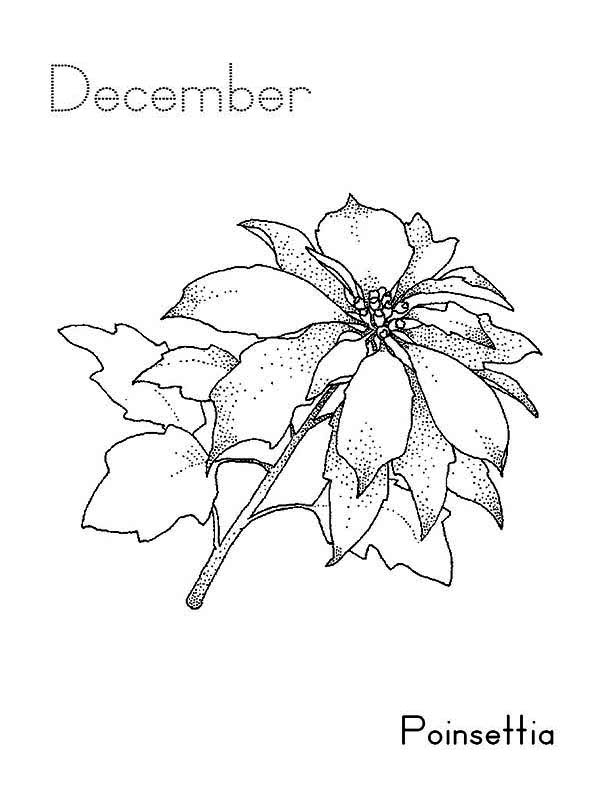 Poinsettia Day, : December Poinsettia for Poinsettia Day Coloring Page