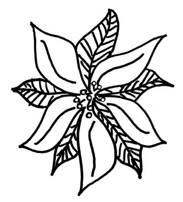 Poinsettia Day, : Drawing of Poinsettia for Poinsettia Day Coloring Page