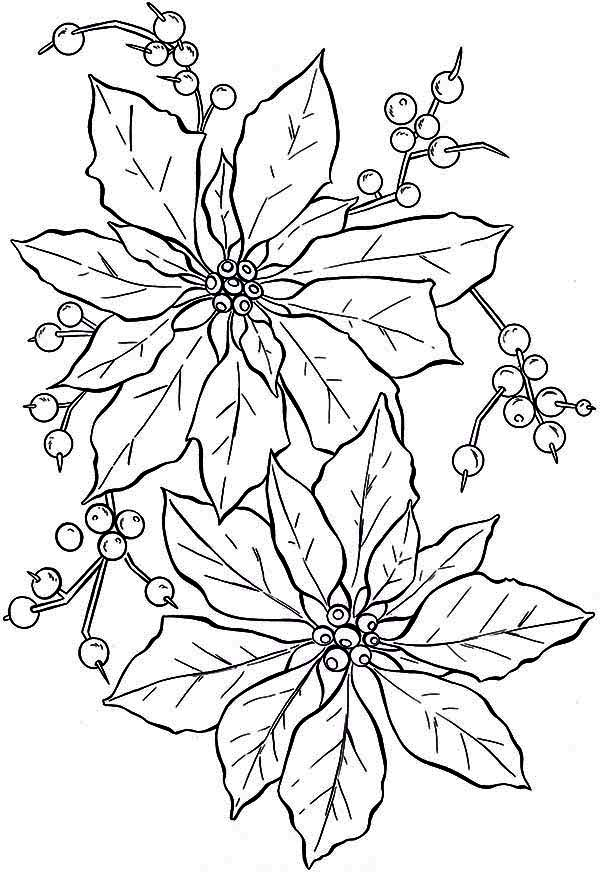 Poinsettia Day, : Gorgeous Poinsettia Flower for Poinsettia Day Coloring Page