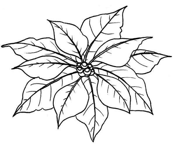 Poinsettia Day, : Leaves of Poinsettia for Poinsettia Day Coloring Page