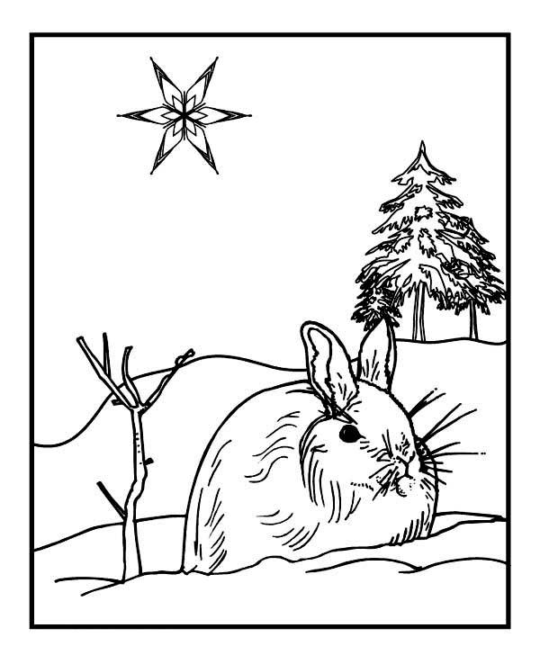 Winter Season, : Wild Rabbit on Winter Season Coloring Page