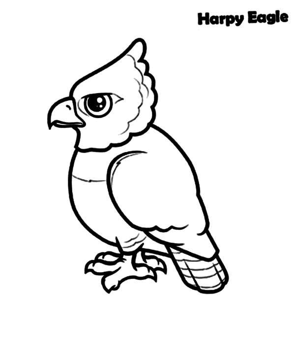 Harpy Eagle, : Baby Harpy Eagle Coloring Pages