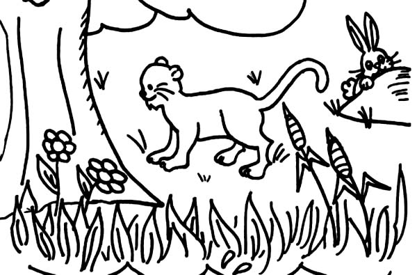 Days Creation, : Days of Creation Coloring Pages for Kids
