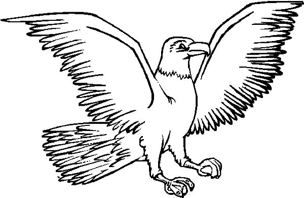Harpy Eagle, : Harpy Eagle Spread Its Wing Coloring Pages