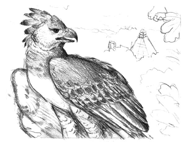 Harpy Eagle, : Harpy Eagle the Royal Hawk Coloring Pages