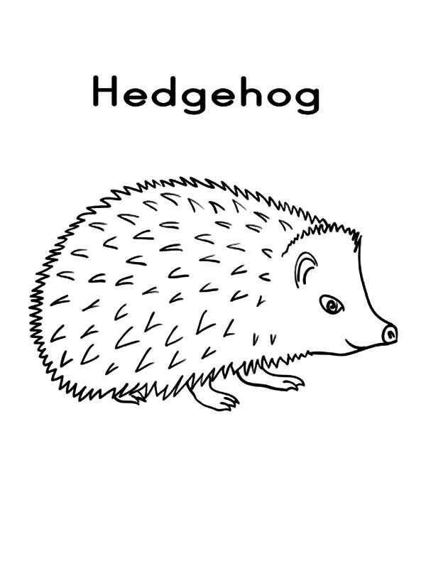 Hedgehog, : Print