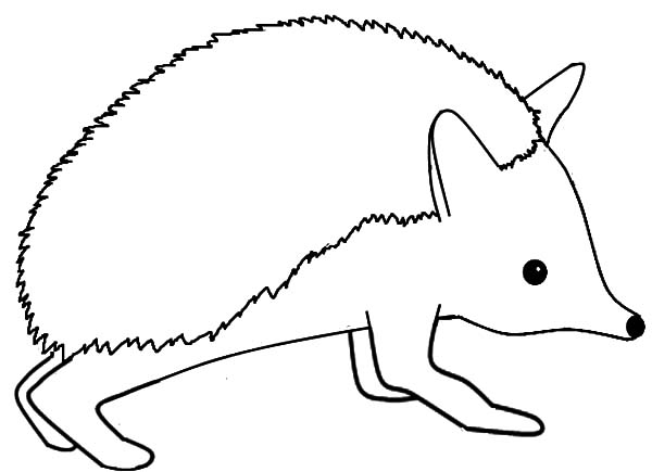 Hedgehog, : Hedgehog Coloring Pages