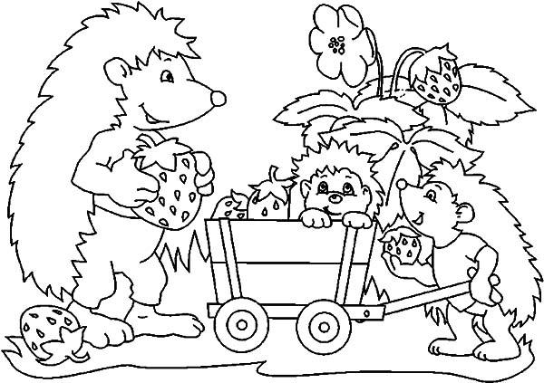 Hedgehog, : Hedgehog Family Strawberry Harvest Coloring Pages