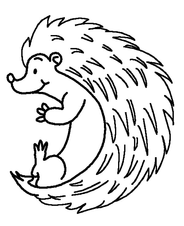 Hedgehog, : Hedgehog Rolling Down Coloring Pages