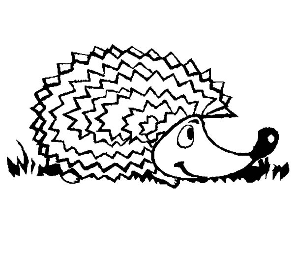 Hedgehog, : Hedgehog Sniffing Coloring Pages