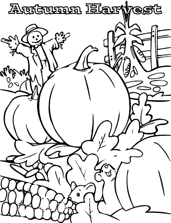 Harvests, : How to Draw Harvests Coloring Pages