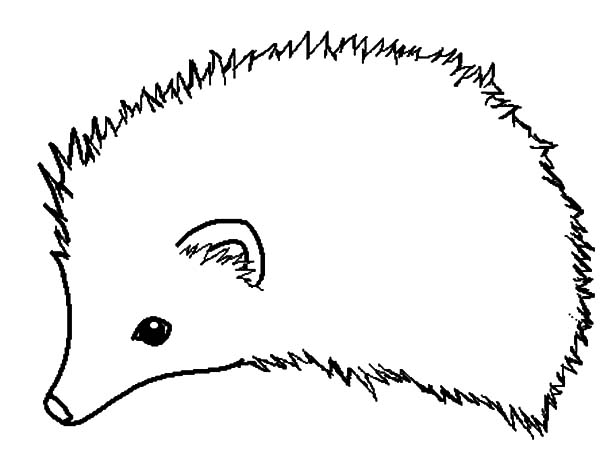 Hedgehog, : How to Draw Hedgehog Coloring Pages