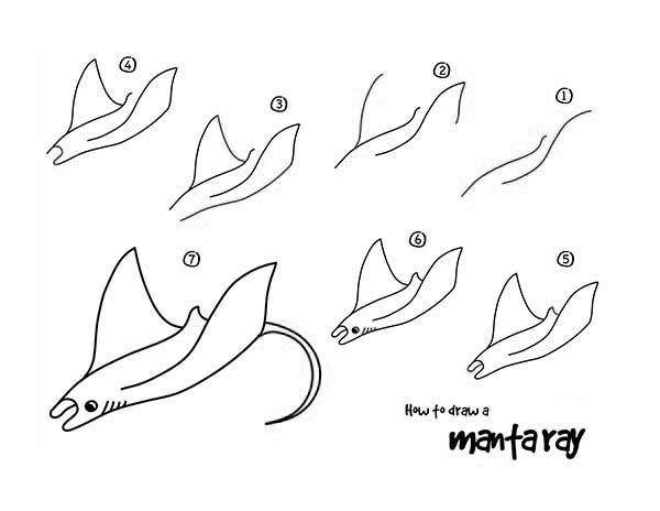 Manta Ray, : how-to-draw-a-snake