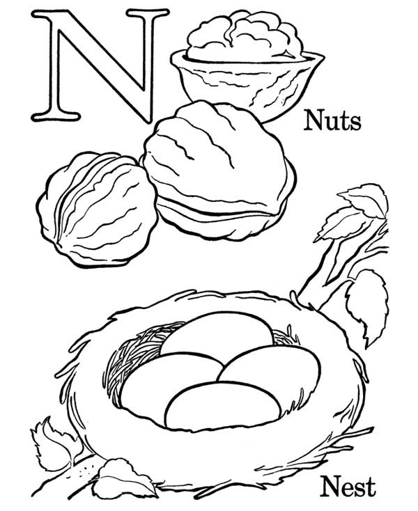 Letter n, : Letter N Words Picture Coloring Page