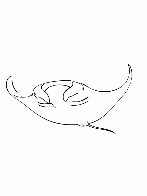 Manta Ray, : Manta Ray Flying Coloring Pages