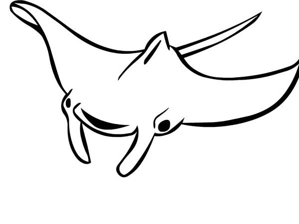 Manta Ray, : Manta Ray Outline Coloring Pages