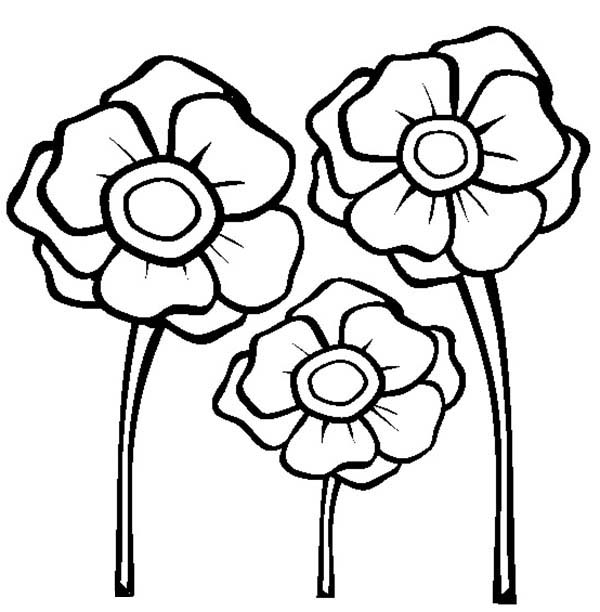 Remembrance Day, : Poppies for Remembrance Day Coloring Pages